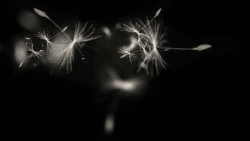 4k Flying dandelion catkins particle background. 6550_4k | Shutterstock HD Video #22444249