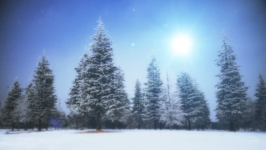 Holiday tree | Shutterstock HD Video #22463881