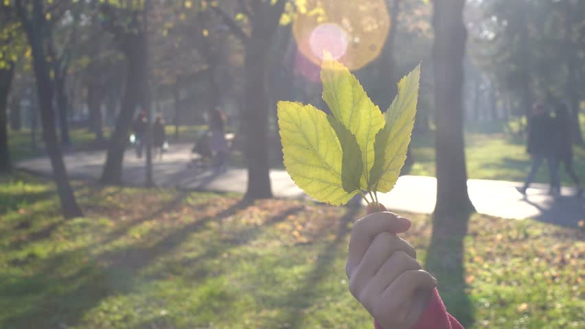 Hand of a Caucasian woman is holding three yellow autumn leaves in park. Shot against direct sun light with beautiful lens flares contributing to the dreaminess. | Shutterstock HD Video #22547953