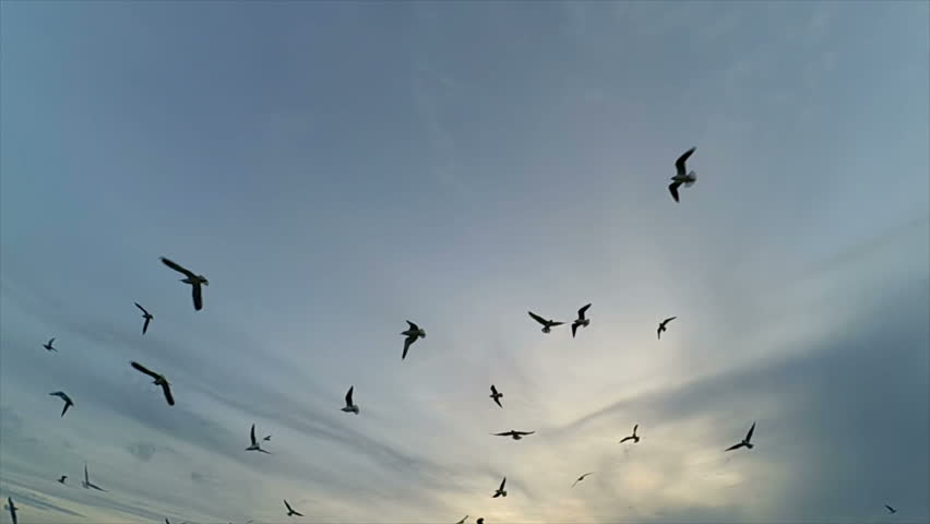 Seagulls in the sky. Slow motion. | Shutterstock HD Video #22594294