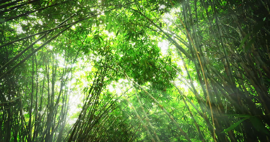 Bright sun light rays in green bamboo forest. Hot summer time in thick tropical jungle with growing exotic plants. Sun rays breaking through young tall bamboo reeds with greenish leaves. | Shutterstock HD Video #22654210