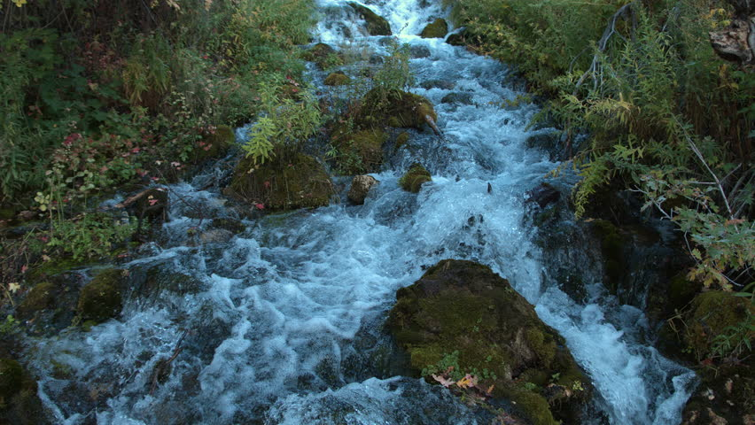 Fast moving stream surrounded by green foliage flowing down a canyon in the mountains in Utah. #22832971