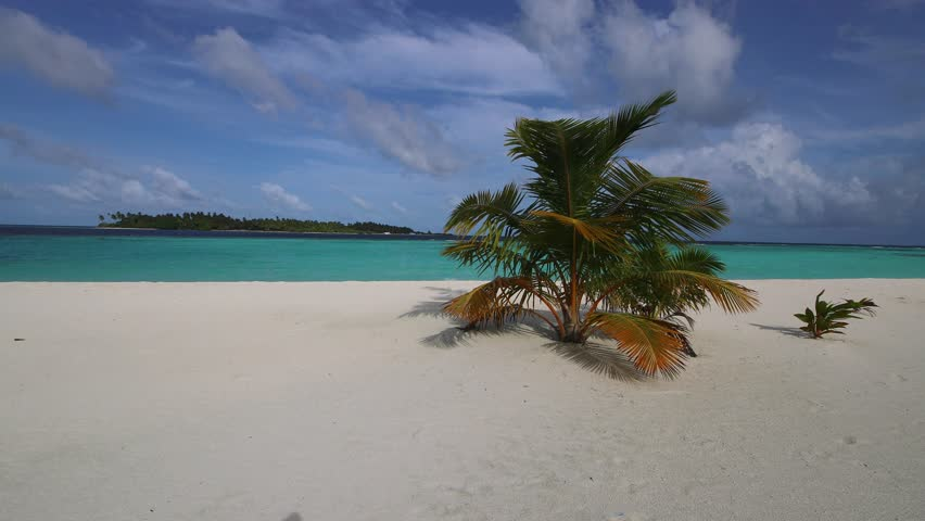 Sandy beach in the Maldives with palms and white sand.   Shutterstock HD Video #22916377