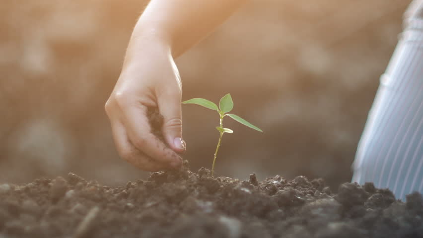 Young woman planting a tree in the garden. Ecology concept, Slow motion shot    Shutterstock HD Video #22952809