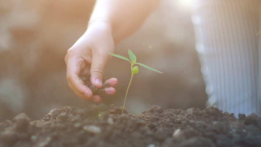 Young woman planting a tree in the garden. Ecology concept, Slow motion shot    Shutterstock HD Video #22952818