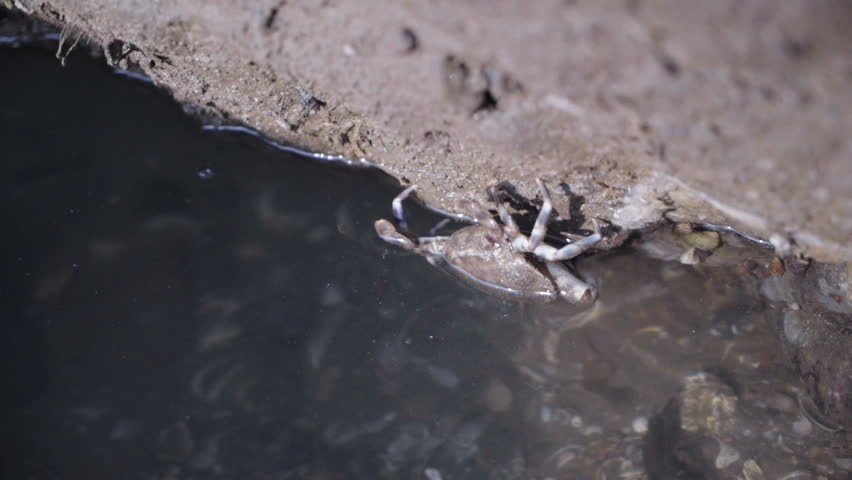 Crab crawls on a stone | Shutterstock HD Video #22990165