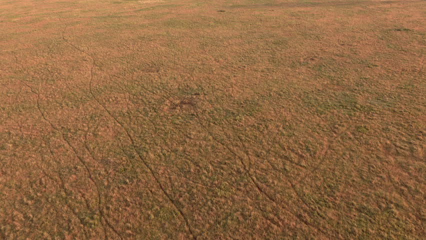 AERIAL, APPROACHING: Flying above endless treeless short grass savanna field in spectacular Serengeti plains at golden sunset. Pattern of tracks and trails left by game walking through wilderness | Shutterstock HD Video #23143546