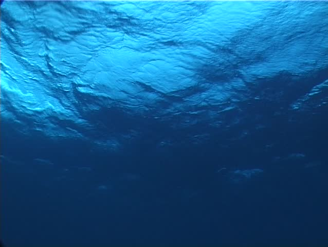 Ocean scenery at rest underwater in Could be anywhere #2332589