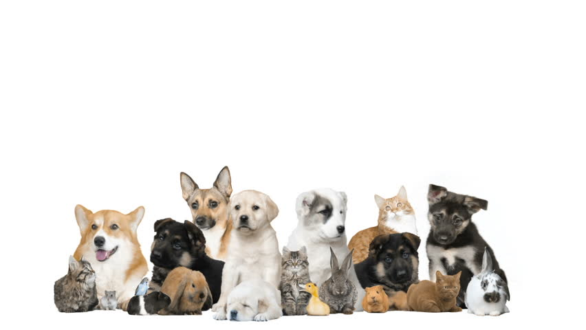 Funny Pets On A White Stock Footage Video 100 Royalty Free 23488906 Shutterstock