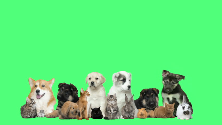 Funny puppies and kittens and rodents on a green background | Shutterstock HD Video #23488915
