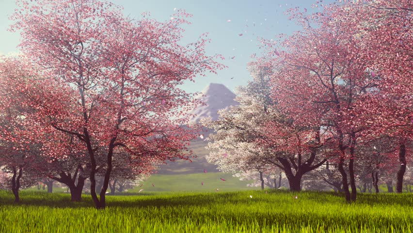 Pink Petals Falling From Flowering Stock Footage Video 100