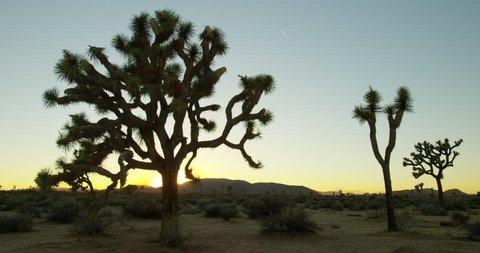 Joshua Tree National Park during sunset time.