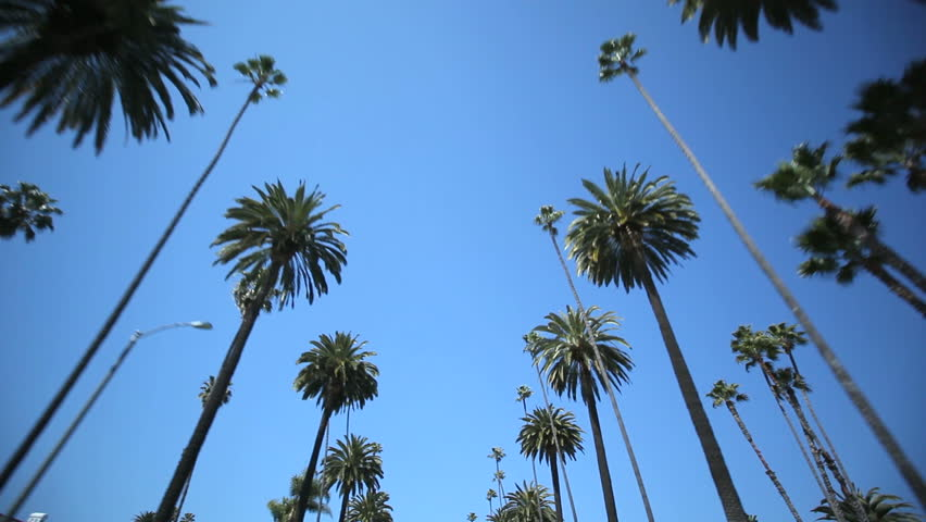 Driving through Palm Trees on Beverly Drive