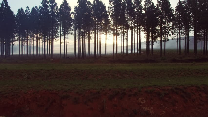4k Drone footage of sun breaking through pine trees controlled after fire.  | Shutterstock HD Video #23734021