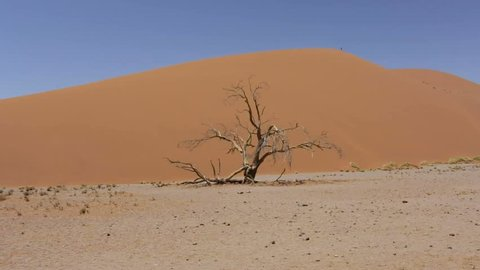 panorama of Dune 45 in sossusvlei in Namib desert with blue sky, best place of Namibia. Namibia, Africa wilderness landscape