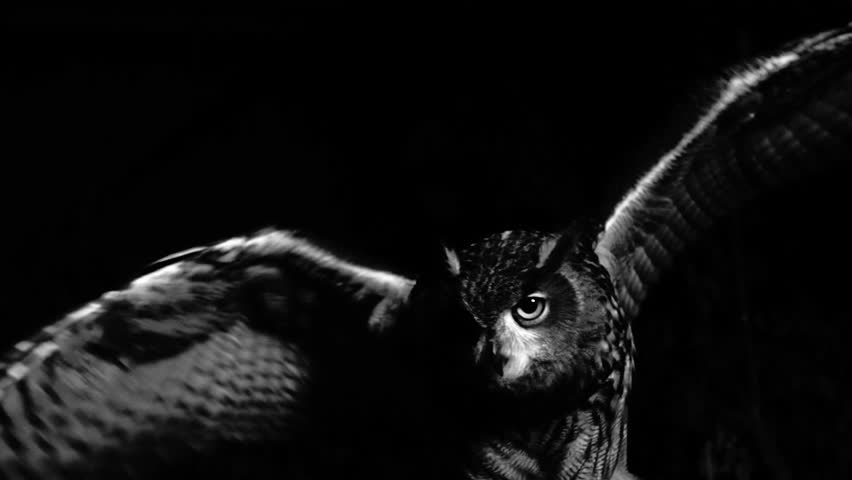 Closeup of eagle owl flapping its wings in the scary night. Black and white shot. Fear. | Shutterstock HD Video #23766556