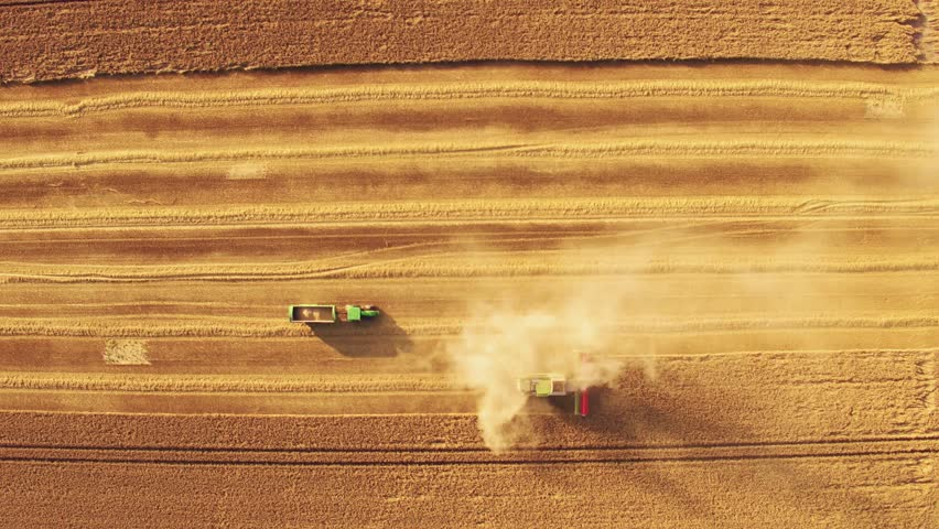 Aerial/Drone footage of a combine harvester, assisted by a tractor, gathering wheat in a British field (4K)  | Shutterstock HD Video #23794330
