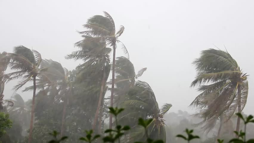 Heavy rain and violent wind on palm trees during a classic tropical storm in monsoon season in the island of Koh Phangan, Thailand, South East Asia. Typhoon, climate change concept