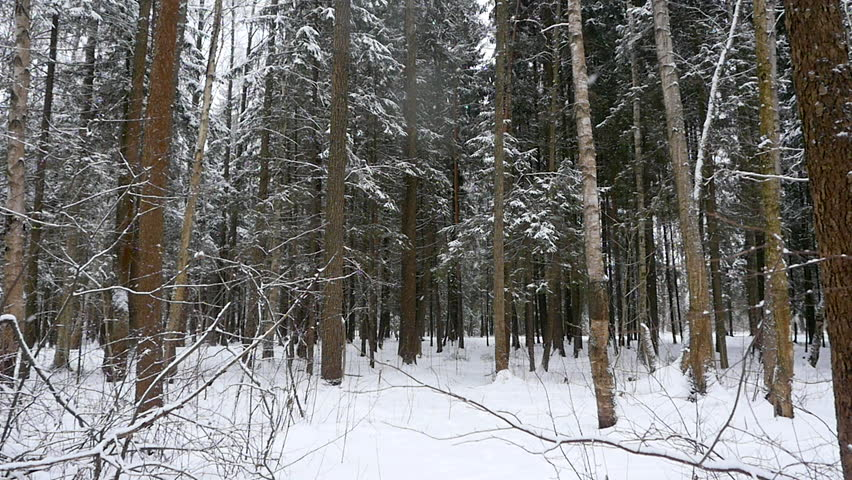 Winter and snow in the forest. slow motion | Shutterstock HD Video #23810830