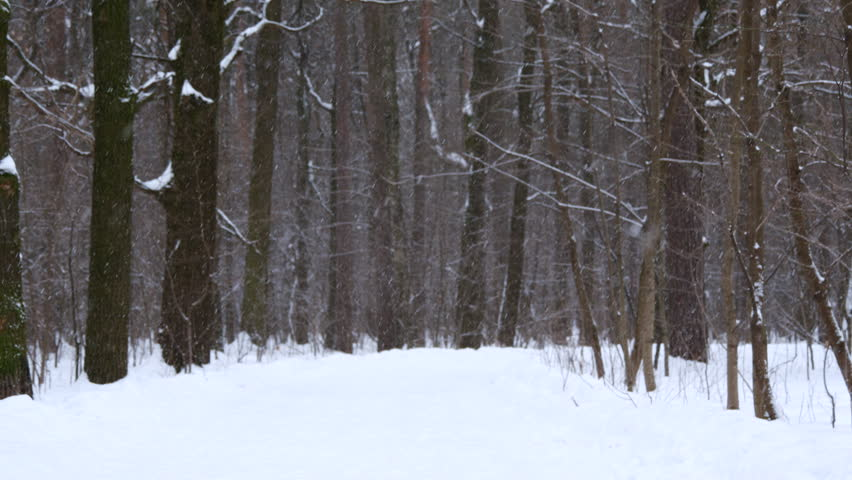 Snowfall In The Winter Forest | Shutterstock HD Video #23846614