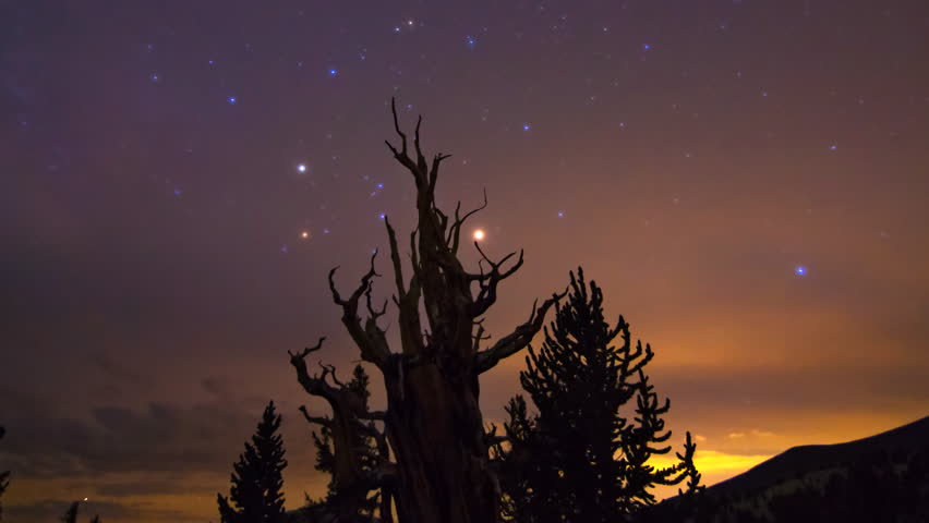 Astrophotography timelapse with zoom out motion of Milky Way over Bristlecone Pine tree silhouette in White Mountain, California | Shutterstock HD Video #23868433
