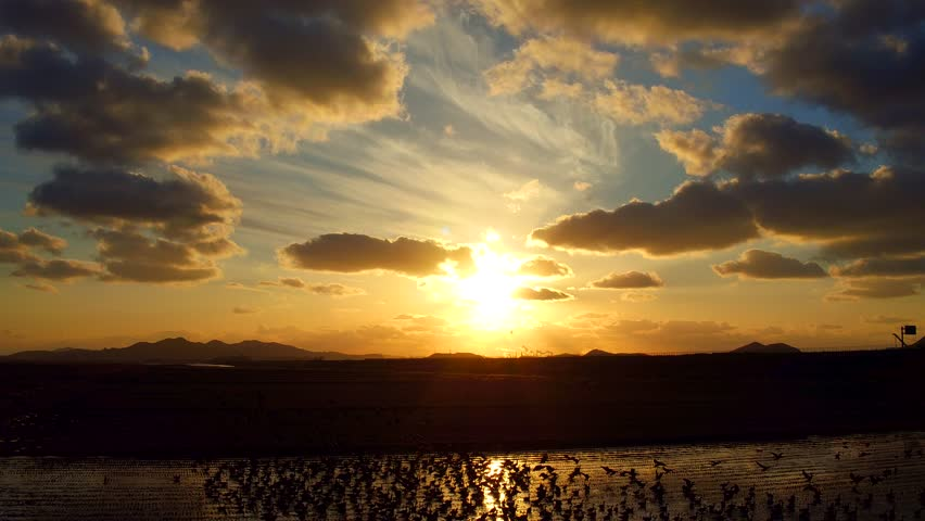 4k aerial video shot, wild goose in sunset, orange, yellow, sky, flying, many