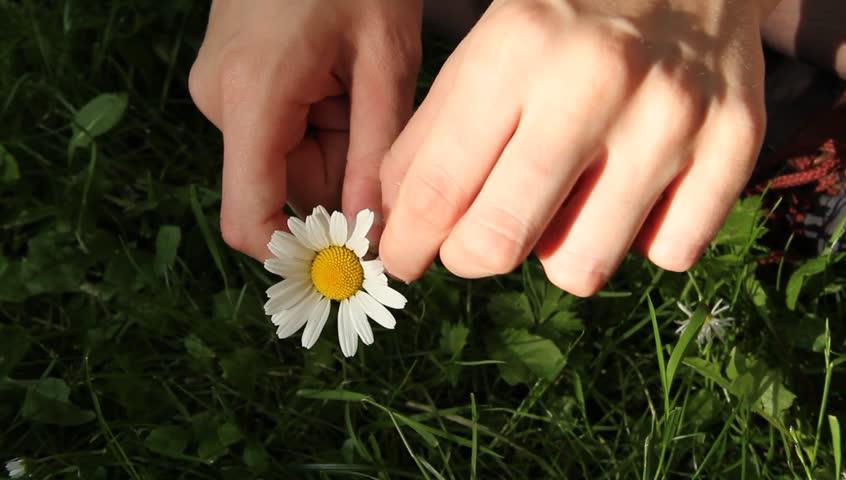 Daisy Flower in a Girls Stock Footage Video (100% Royalty-free) 2409176 |  Shutterstock
