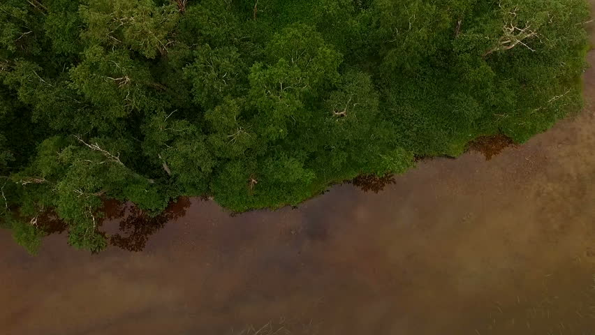 Flying over the forest. helicopter flies over the trees. Aerial View of Pinetrees   Shutterstock HD Video #24094975