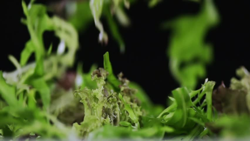 SLOW MOTION FOOD: green salad leaves fall in a bowl close up