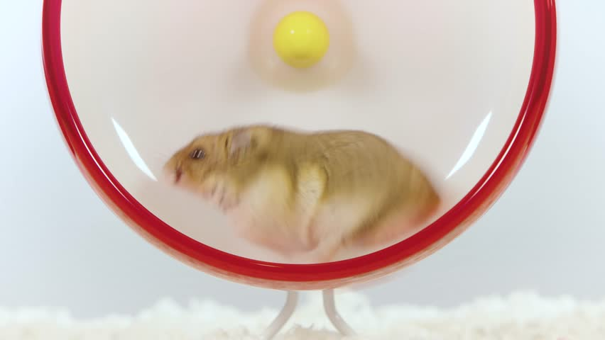 Small brown hamster continuously running fast on red wheel
