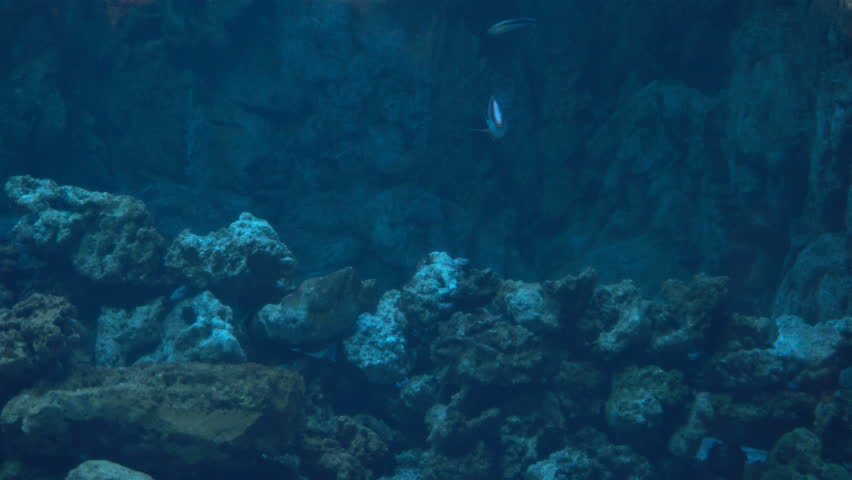 exotic Aquarium fishes swim in sea blue water
