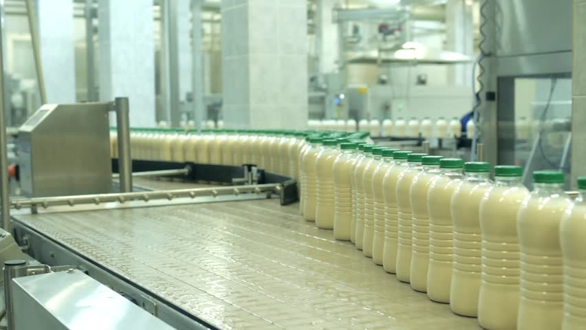 Dairy Plant. Conveyor with milk bottles. Production line