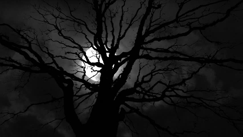 Full Moon with night clouds and large wicked tree time lapse.