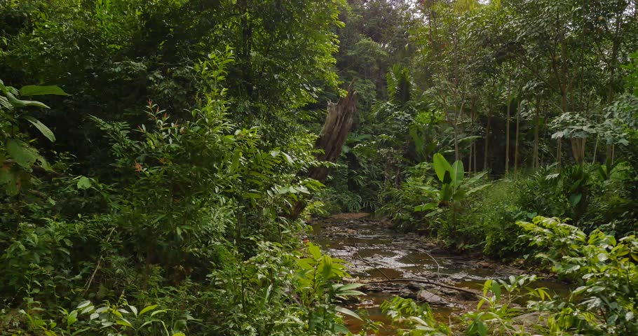 River in the jungle filmed with camera slider | Shutterstock HD Video #24449570