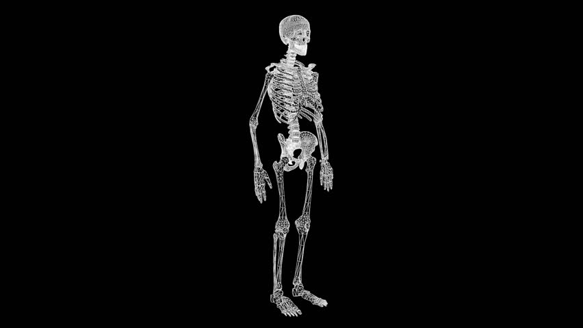 Human Skeleton Wireframe Hologram in Motion. Nice 3D Rendering  | Shutterstock HD Video #24465023