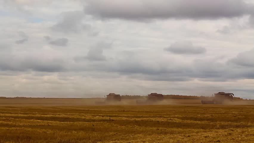 Many harvesters. Wheat harvest.   Shutterstock HD Video #24506516