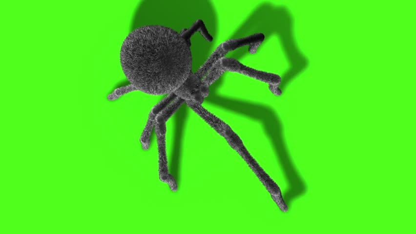 Arachnid Black Widow Spider Green Screen 3D Rendering Animation