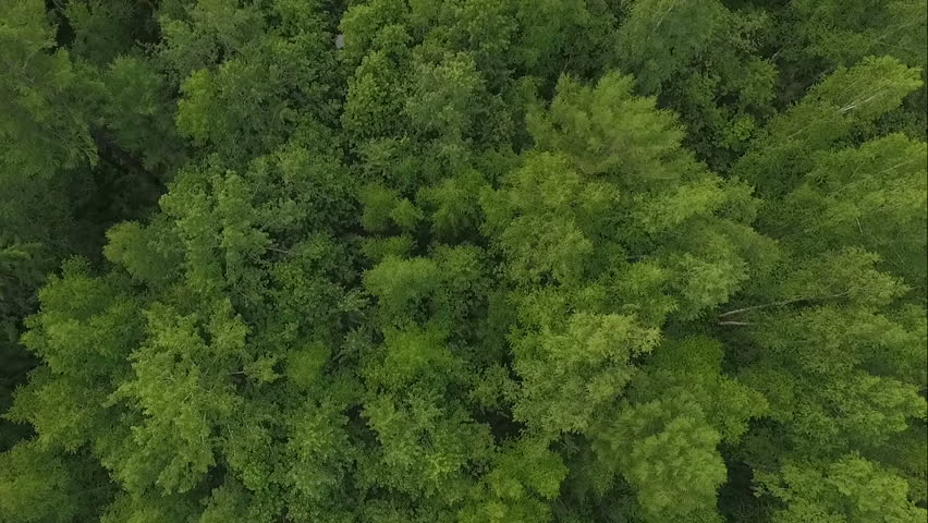 Aerial drone shot over the north european forest. Drone spinning. #24545858