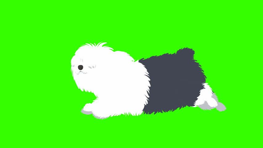 Cartoon Sheep Dog Running: Loop + Matte