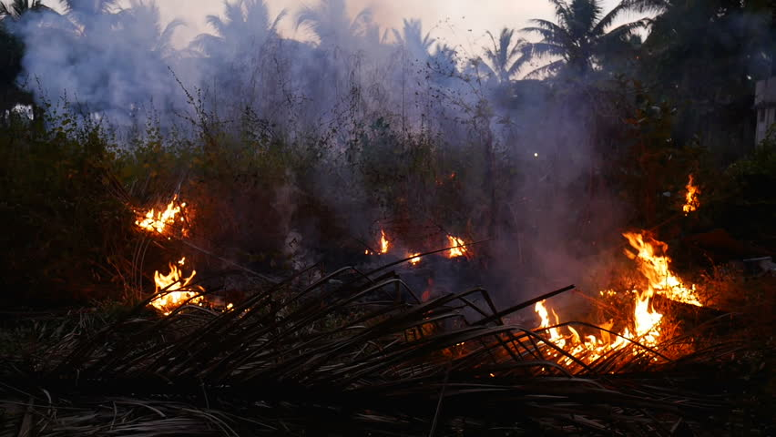 Fire in the jungle forest