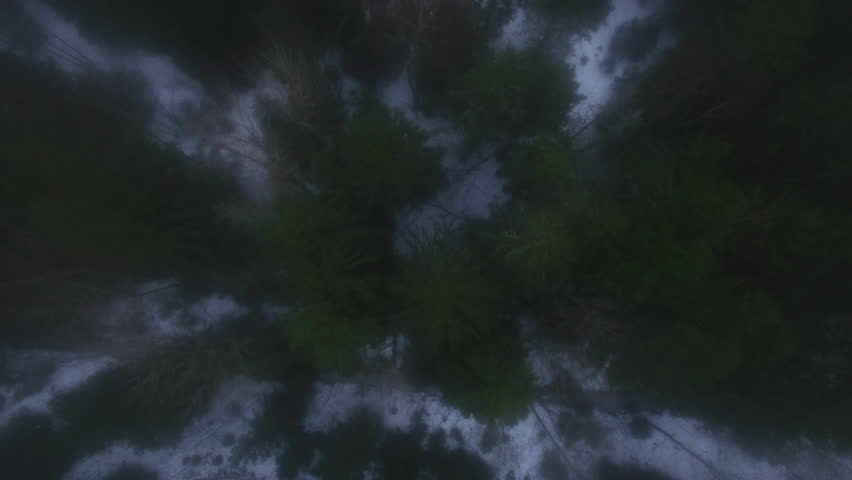 Aerial Shot of a Winter Forest. Snow Lying on the Ground and Fog is Visible. Shot on 4K (UHD) Camera.   Shutterstock HD Video #24794423