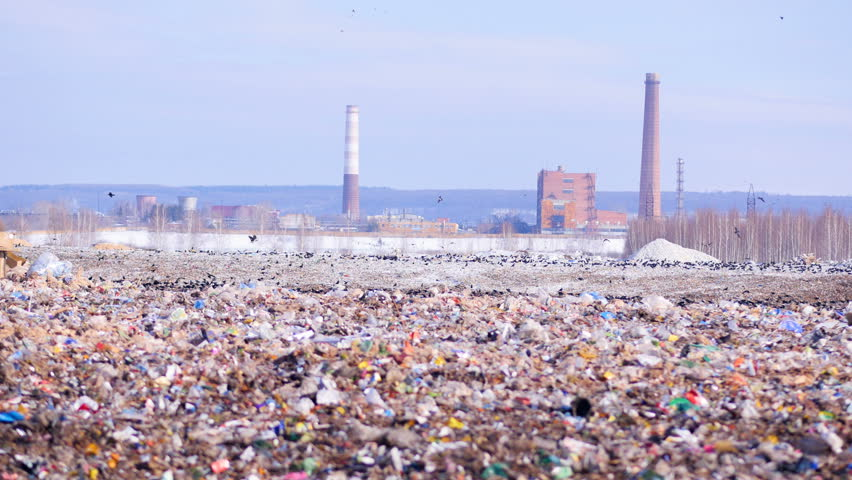 Landfill site with piles of garbage, flock of scavenging birds on background. | Shutterstock HD Video #24819626