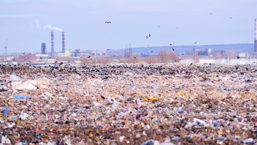 A flock of birds takes off a city dump, landill. Industrial plant on a background. | Shutterstock HD Video #24819728