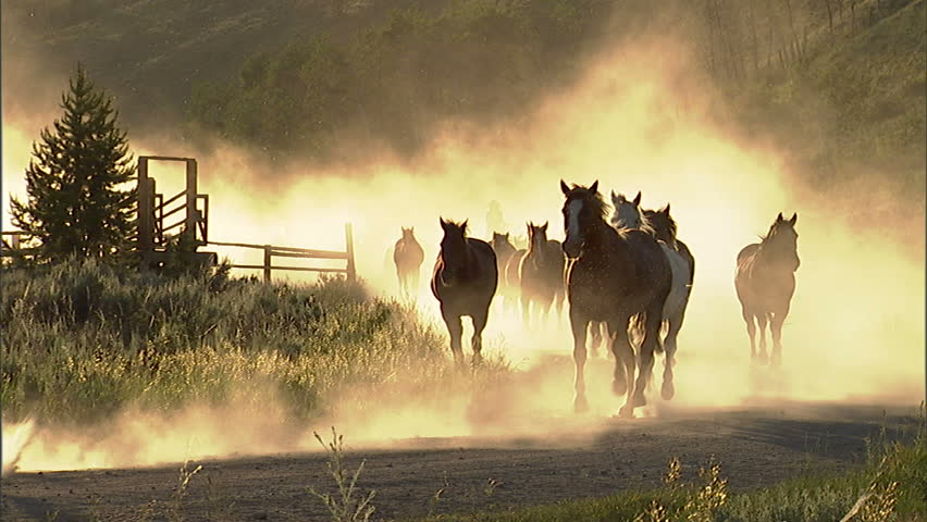 Herd of horses running along a dusty country road. | Shutterstock HD Video #2492267