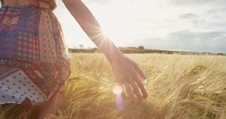 Close-up of woman's hand running through organic wheat field, steadicam shot. Slow motion. Girl's hand touching wheat ears closeup. Sun lens flare.  #25019120