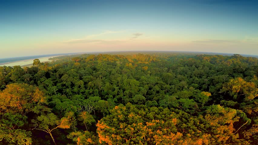 Aerial Shot Of Amazon Rainforest at Sunset