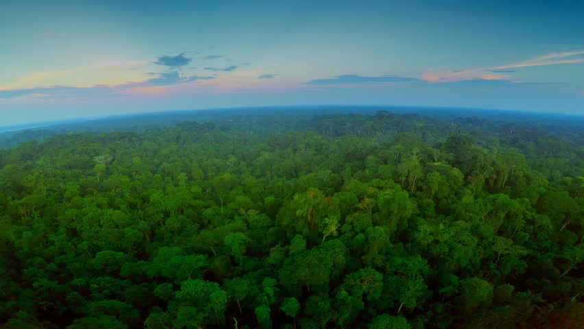 Aerial Shot Of Amazon Rainforest at Twilight