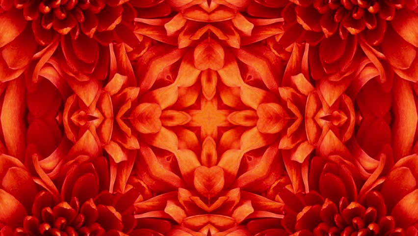Abstract red flower pattern background. Seamless Loop. | Shutterstock HD Video #25180235