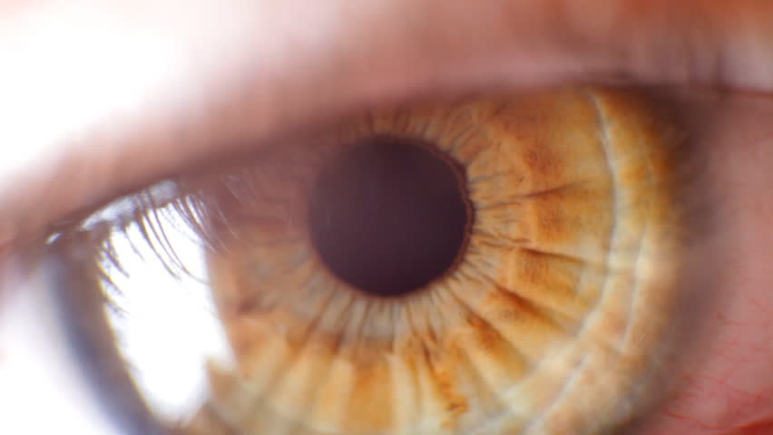 Macro video of the eye pupil. contraction and mydriasis. The eye is green.