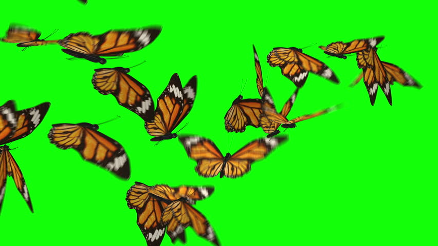 Butterflies flock flying left to right isolated on green box background. Ultra HD, Ultra-High Definition. Easter theme. Fly away. | Shutterstock HD Video #25357367